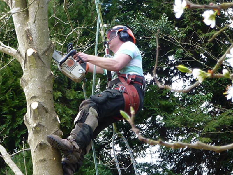 Adam Gibson Treecare, working trimming tree