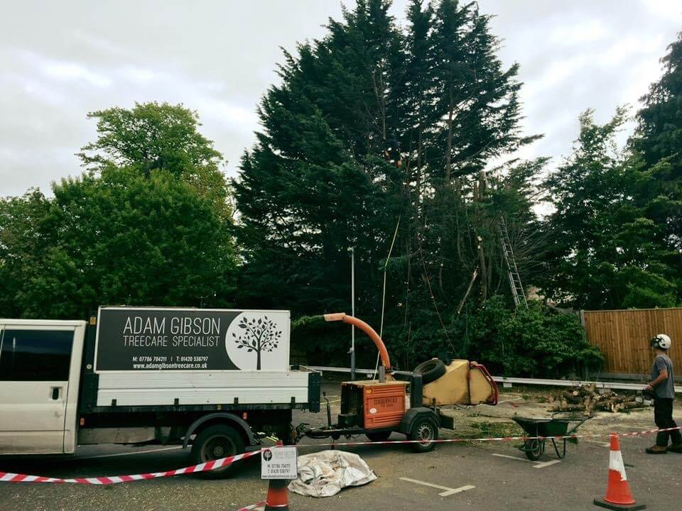 Tree Surgeon Petersfield